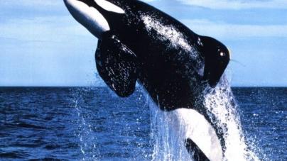 Mucize hayvanlar yunus ve balina