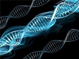 Genetik Verilerle Türkiye Türkleri