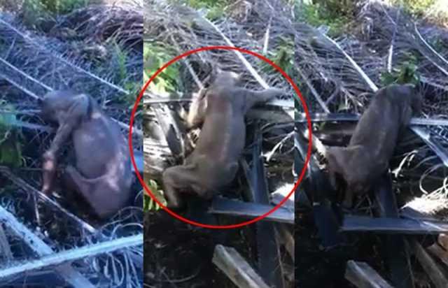 Endonezya'da Garip Yaratık Korkuttu