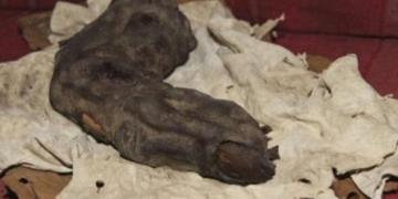 Mısır'da Dev Parmağı Mı Bulundu?