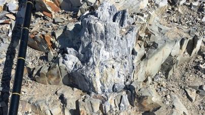 280 Milyon Yıllık Orman Fosili Antarktika'da Keşfedildi!
