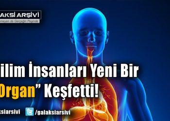 Bilim İnsanları Yeni Bir 'Organ' Keşfetti!