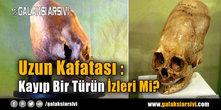 Uzun Kafatası : Kayıp Bir Türün İzleri Mi?