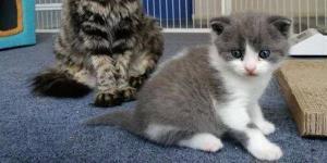 Çin'li bir biyoteknoloji şirketi, evcil hayvan klonlama işini ticari hale getirmeye hazırlanıyor