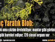 İlginç Yaratık Blob: Beyni yok ama çözüm üretebiliyor, mantar gibi görünüp hayvan gibi hareket ediyor, 720 cinsel organı var