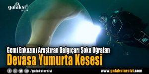 Gemi Enkazını Araştıran Dalgıçarı Şoka Uğratan Devasa Yumurta Kesesi